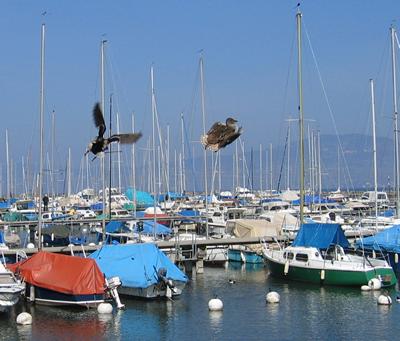 Port du Bouveret 2008 -CG